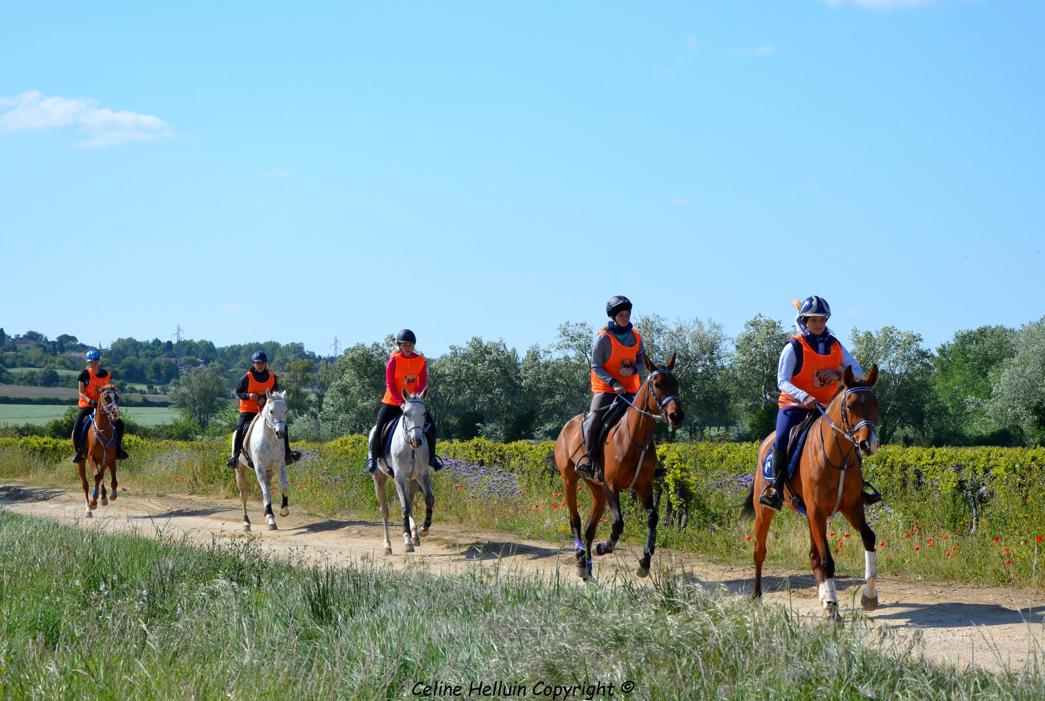 Grande Semaine au Haras national d'Uzès - Endurance équestre